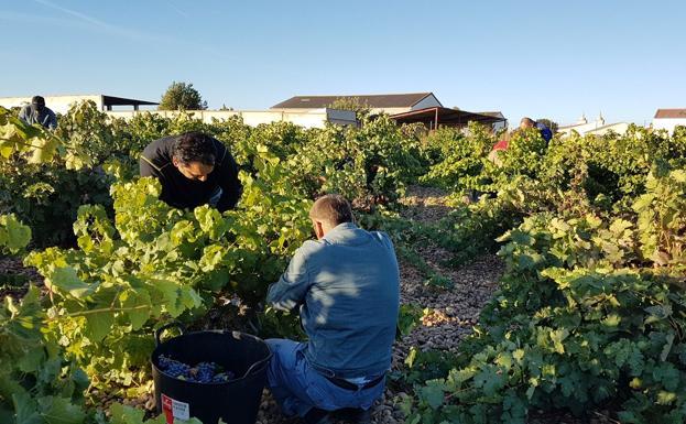 Ribera del Duero pasa a consolidarse internacionalmente en mercados como Canadá y Holanda
